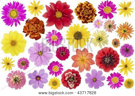 Flowers Big Set Isolated