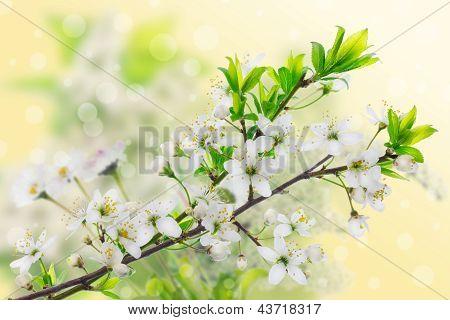 Green Yellow Spring Concept