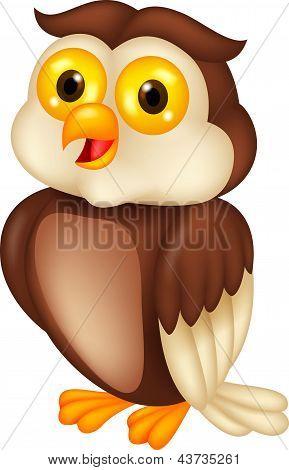 Cute owl bird cartoon
