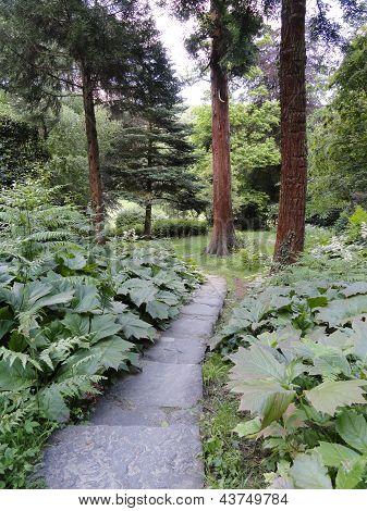 Rural Pathway Landscape