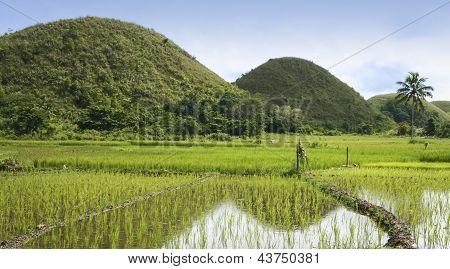 Chocolate Hills Bohol Island Filipinas