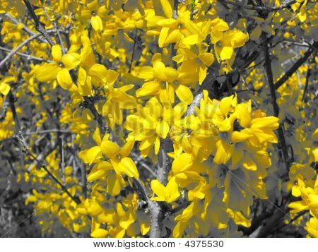 Close-up Photograph Yellow Blooming Flowers On Tree