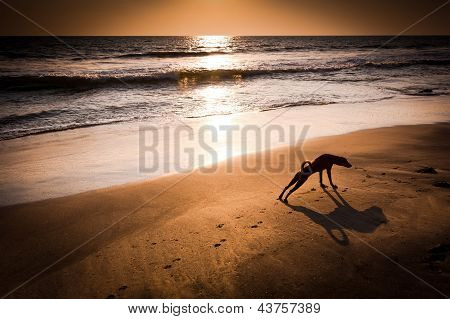 Concept Idea Of Dog Yoga. Dog In Yoga Position Urdhva Mukha Svanasana (upward Facing Dog) At Tropica