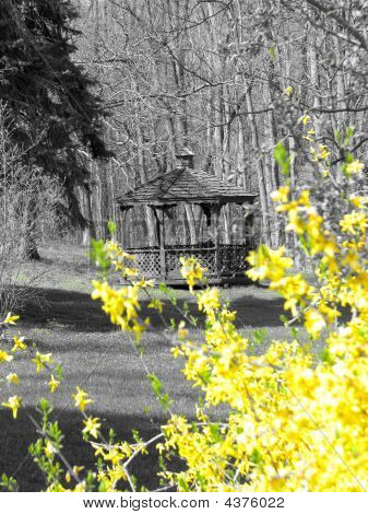 Photograph Of Outdoor Gazebo Perfect For Greeting Card Stock