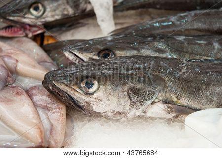 Fresh Hake At A Fish Market