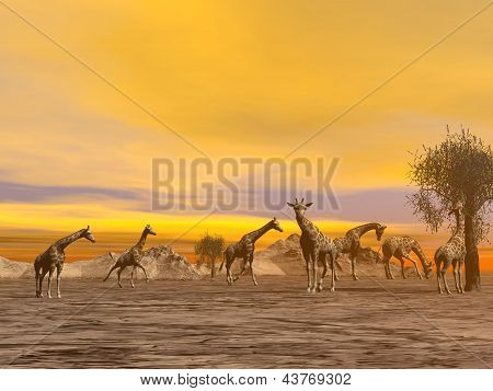 Giraffes In The Savannah - 3D Render