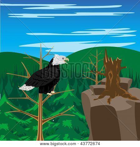 Águia ave situa-se na árvore