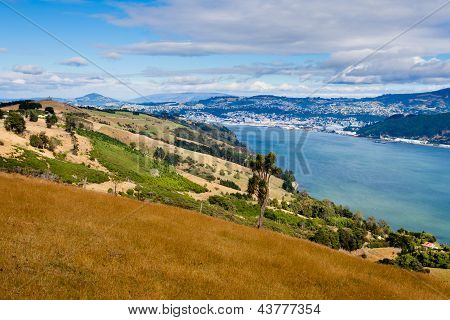 Dunedin and Otago Harbour South Island New Zealand