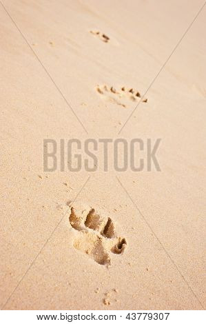 pawprints at the beach