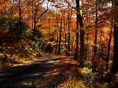 Orange yellow and red fall trees along a drive in Great Smoky Mountains National Park