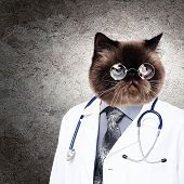 image of puss  - Funny fluffy cat doctor in a robe and glasses - JPG
