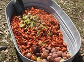 stock photo of craw  - cooked boil craw fish in a tub - JPG