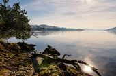 image of off-shore  - View of a fallen branch resting on a rocky outcrop by the shore of Windermere in the English Lake District - JPG