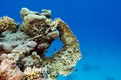 foto of fire coral  - coral reef with yellow fire coral at the bottom of red sea in egypt - JPG