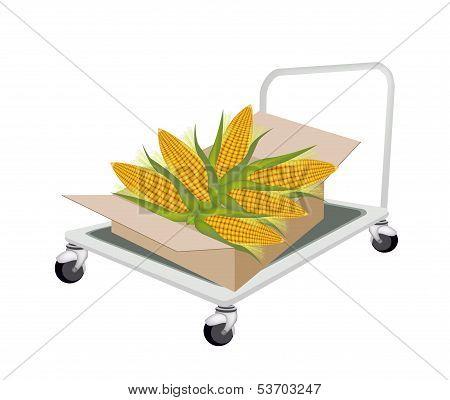 Hand Truck Loading Fresh Corns in Shipping Box