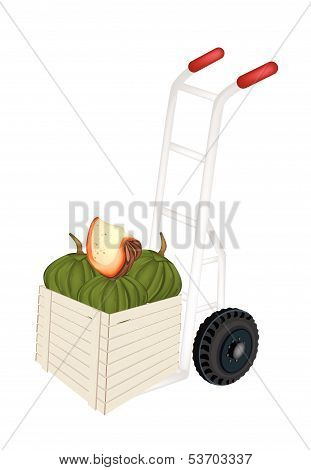 Hand Truck Loading Green Pumpkins In Shipping Box