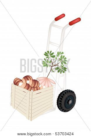Hand Truck Loading Fresh Taro In Shipping Box