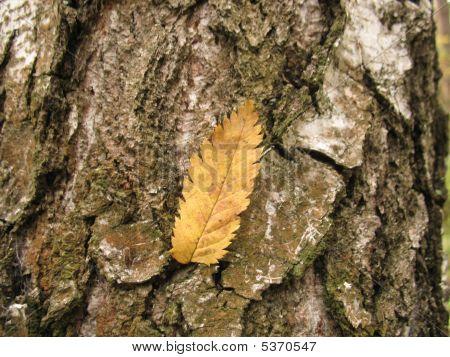Leaf On A Tree Bark