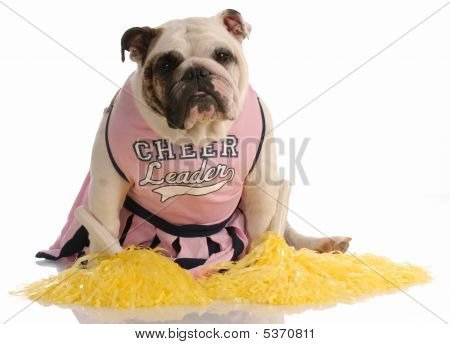 Bulldog Dressed As Cheerleader
