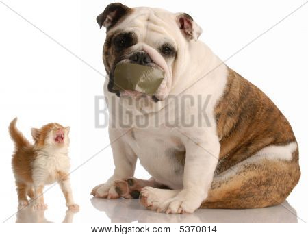 Bulldog With Tape On Mouth And Kitten