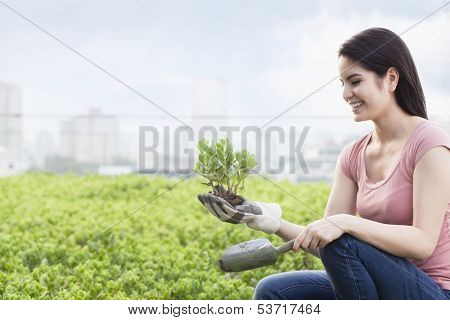 Young smiling woman gardening and holding plant in roof top garden in city