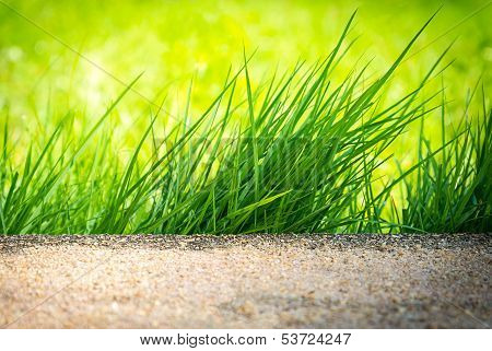 Clump Of Green Grass