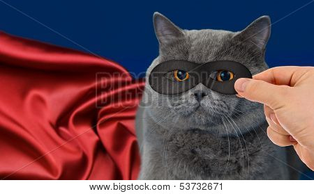 super-hero cat