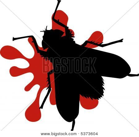 Squashed Fly