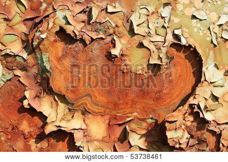 rusty metal plate detail