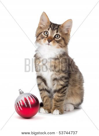 Cute Kitten Sitting Next To A Christmas Ornament On A White Background.