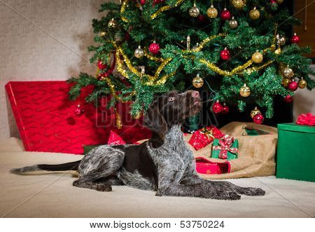 Puppy And Christmas Tree