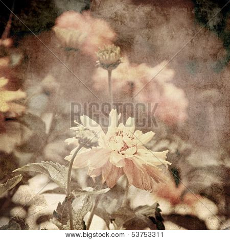 art floral vintage sepia background with light yellow chamomiles