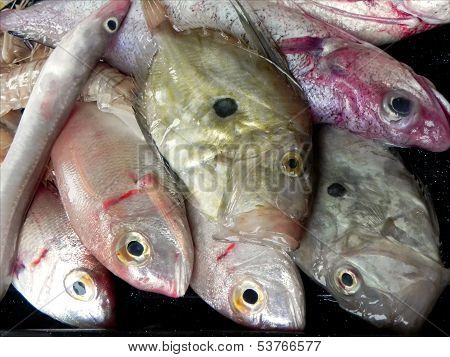 Mediterranean fish for stew