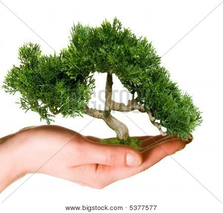Tree held in hand