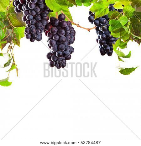 Pieces of red wine grapes on white background