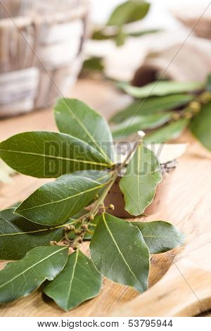 Bay. Branch Of Laurel. Food Background