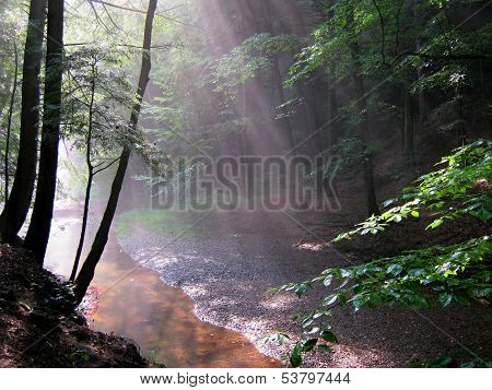 Relaxing Forest Scenery