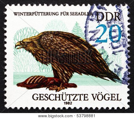 Postage Stamp Gdr 1982 Sea Eagle, Bird Of Prey