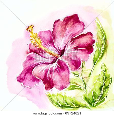 Pink hibiscus, watercolor painting.