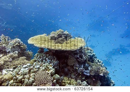 coral reef with hard corals and exotic fishes at the bottom of tropical sea on blue water background