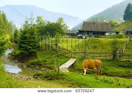 Rural landscape in Carpathian Mountains in the early morning , Ukraine