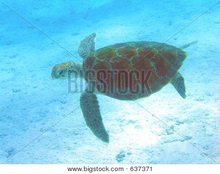 Swim Turtle 2