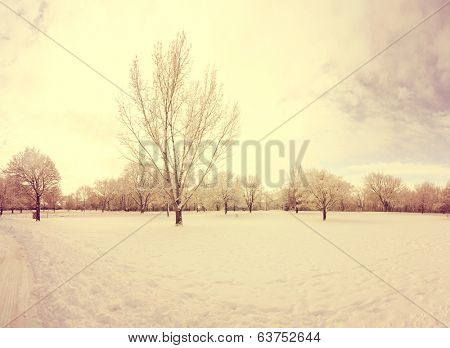 a scenic cold winter landscape with snow and trees done with a retro vintage instagram filter