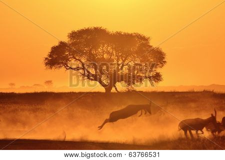 Sunset Background from Africa - Blesbok Jump of Golden Dust