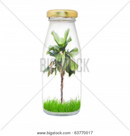 Plam Tree In Bottle