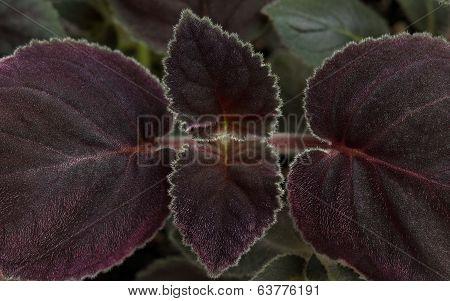 Foliage Of Houseplants