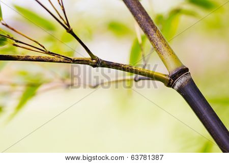 Withered Branch Of Bamboo In Forest