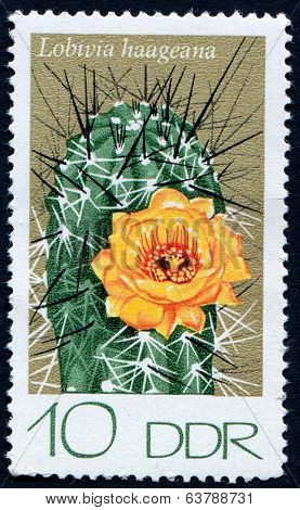 GERMANY, circa 1960: Postage stamp from East Germany showing a  Cactus flower, circa 1960