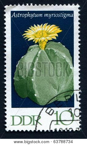 GERMANY, CIRCA 1960: Postage stamp from East Germany showing a Bishop's Cap Cactus flower (Astrophytum myriostigma), circa 1960
