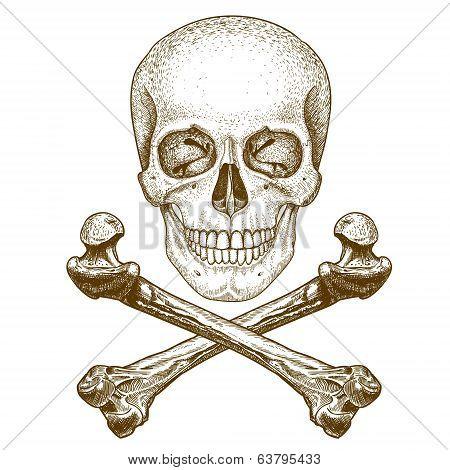 Engraving Skull And Crossbones On White Background